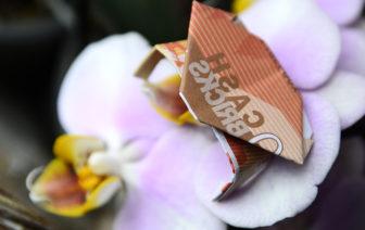 Geldscheine falten Anleitung Grebs