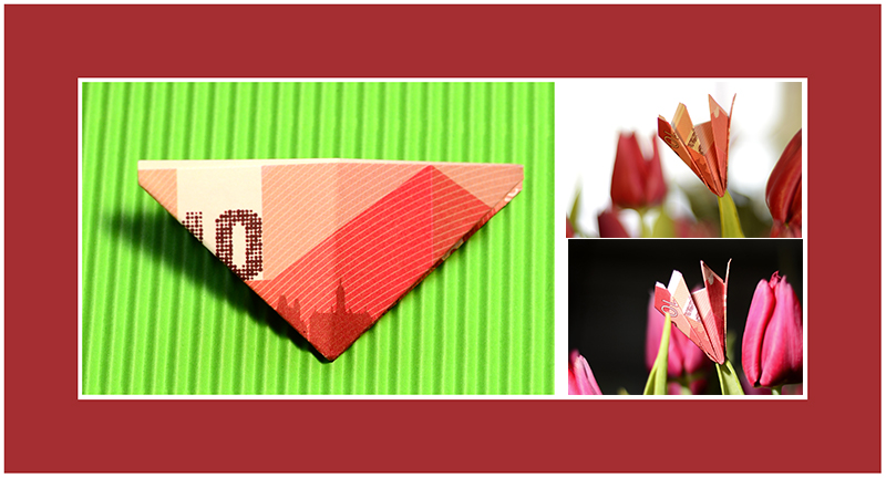 Geld schneken Blumen Tulpe